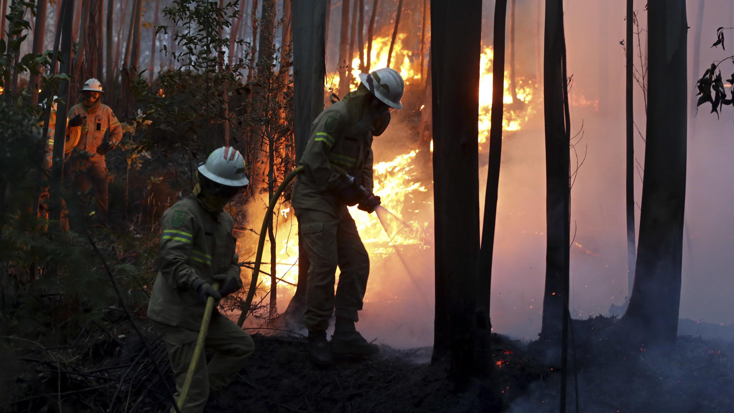 More than 20 dead from forest fires in central Portugal
